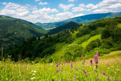 summer landscape in mountains. amazing scenery with wild herbs in fields on rolling hills of carpathians in dappled light. clouds on the blue sky above the distant ridge