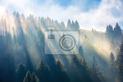 sun light through fog and clouds above the forest. spruce trees on the hill viewed from below. fantastic nature scenery. morning motivation concept