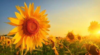 Sticker Sunflower