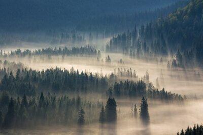 Sticker Tannen auf einer Wiese den Willen zum Nadelwald in nebligen Bergen