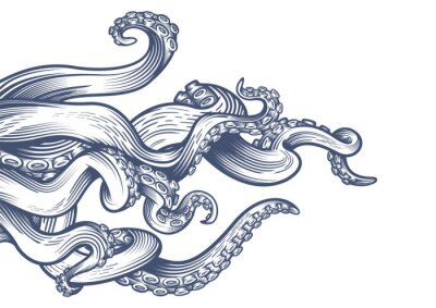Sticker Tentacles of an octopus. Hand drawn vector illustration in engraving technique isolated on white background.
