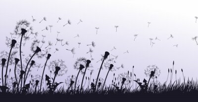 The dandelion Flowers with flying seeds.