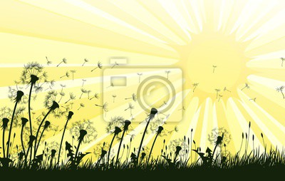 The dandelion Flowers with flying seeds and sun.