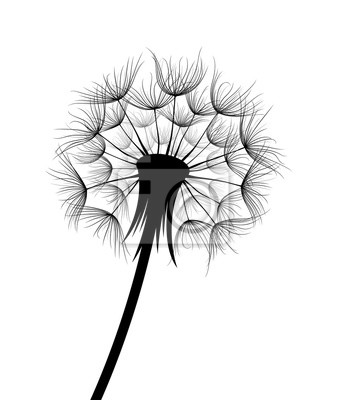 The Field dandelion flower sketch.