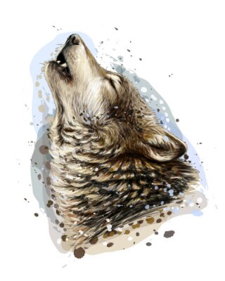 Sticker The wolf howls. Sketchy, graphical, color portrait of a wolf head on a white background with splashes of watercolor.