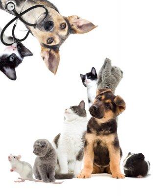 Sticker Tiere suchen