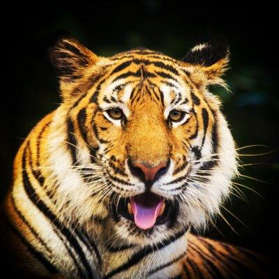 Sticker Tiger Porträt eines Bengal Tiger.