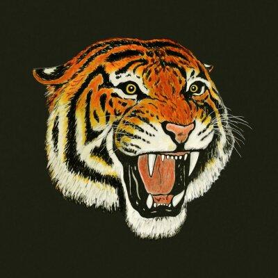 Sticker tiger roar drawing
