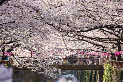 Sticker TOKYO, JAPAN - 30. März: Tourist nicht identifiziert Aufnahmebild mit Cherry Blossom Flower am 30. März 2015 in Naga Meguro Bereich, Tokyo. Dieser Bereich ist populärer Sakura-Punkt in Tokyo mit schön