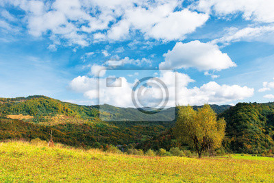 tree in yellow foliage on the meadow. beautiful countryside landscape on a sunny day with fluffy clouds on the sky. carpathian rural area in autumn