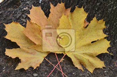 Tree leaves on the trunk in autumn season