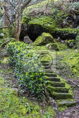 Sticker: Treppen aus stein und deckel aus moos im wald, umgeben von  pflanzen,
