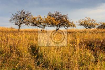trockenen Herbst Bäume und Gras unter einer schweren grauen Himmel
