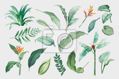 Sticker Tropical leaves and plants
