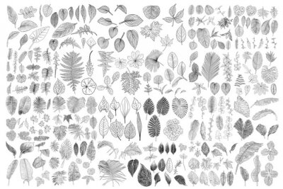 Sticker Tropical leaves collection. Isolated fern elements on white background. Set of jungle forest and domestic home leaf, exotic eucalyptus foliage, natural real live palm leaves, herbs drawing. Vector.