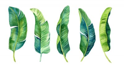 Sticker Tropical leaves, palm leaves drawn by hand. Set of watercolor illustrations. For fabric, cards, invitations, weddings and other