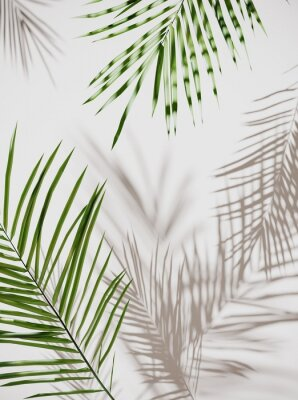 Sticker Tropical palm green leaves on  light pastel background. Unobtrusive botanical background with shadow on the wall - trend frame, cover, card, postcard, graphic design - 3D, render, illustration.