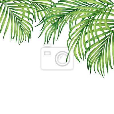 Tropische Blattkokosnuß des Aquarellmalereirahmens, Palme, grünes Blatt auf weißem Hintergrund Tropische exotische Blattkarte oder -design des Aquarells Hand gezeichnete Illustration, Hochzeitseinladu
