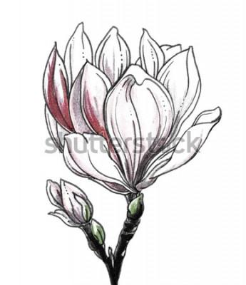 Sticker Tropische Blumenblüte der weißen Magnolie auf weißem Hintergrund. Übergeben Sie gezogene botanische einfarbige Schwarzweiss-Illustration des Aquarells für Heiratsdruck, Karte, Einladung. Japanischer S