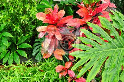 Tropische pflanzen im garten notebook-sticker • wandsticker verlässt ...