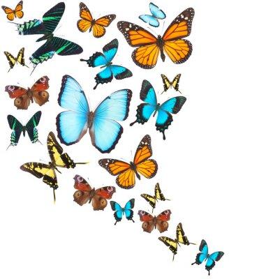Sticker Tropische Schmetterlinge eingestellt