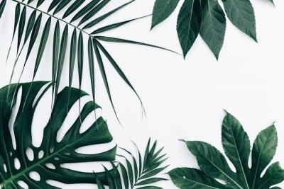 Sticker Tropischer modischer Hintergrund. Blätter über weißem Hintergrund