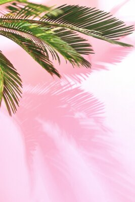 Sticker Tropischer Pastellhintergrund des Sommers mit Palme