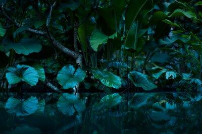 Sticker Tropischer Regenwald mit Wasserspiegel