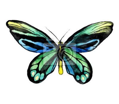 .Tropischer Schmetterling. Aquarell handbemalten Schmetterling