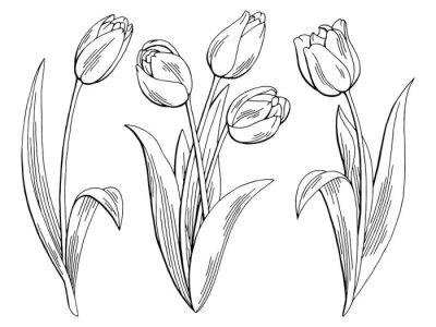 Sticker Tulpe Blume Grafik schwarz weiß isoliert Skizze Illustration Vektor