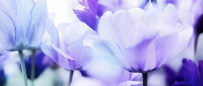 Sticker Tulpen cyan-blau violett ultraleicht