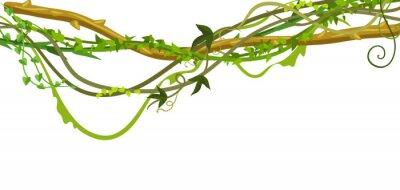 Sticker Twisted wild lianas branches banner.