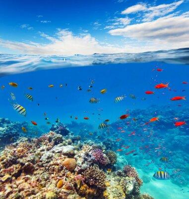 Sticker Unterwasser-Korallenriff mit Horizont und Wasserwellen