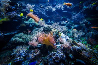 Sticker Unterwasserkorallenrifflandschaft mit bunten Fischen