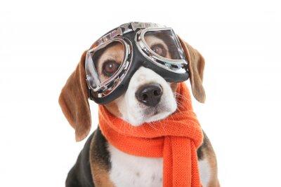 Sticker Urlaub Haustier-Konzept, Hund in fliegenden Gläser