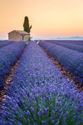 Sticker Valensole, Provence, Frankreich. Lavendelfeld voll von lila Blüten