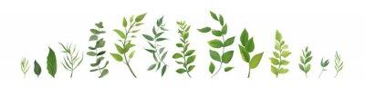 Sticker Vector Designerelementsatzsammlung grünen Waldfarns, das tropische grüne Eukalyptusgrün-Kunstlaub, das Blätter in der Aquarellart natürlich lässt. Elegante Illustration der eleganten Schönheit für Des