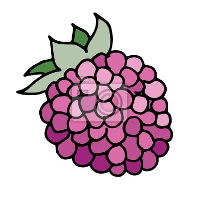 vector illustration of raspberry