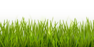 Sticker Vector realistic seamless green grass border or frame isolated on white background - nature, ecology, environment, gardening template