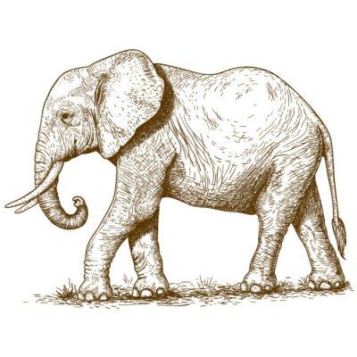 Sticker Vektor-Illustration der Elefanten Gravur