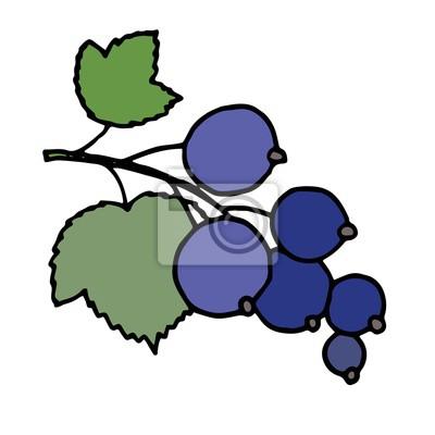 Vektor-Illustration von schwarzer Johannisbeere