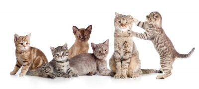 Sticker verschiedenen Katzen Gruppe isoliert