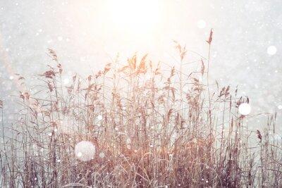 Sticker Verschwommen Winter Hintergrund, trockene Gras Schneeflocken