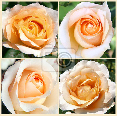 vier gelbe Rosen desin