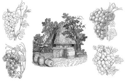 Sticker Vineyard illustration