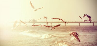Sticker Vintage retro stylized photo of a seagulls, old film effect.