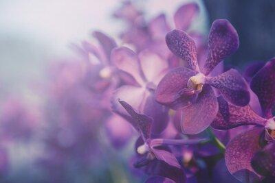 Sticker Violette Orchidee in der Farm. Filter: Cross-Prozess Vintage-Effekt.