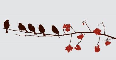 Sticker Vögel auf dem Ebereschen Zweig