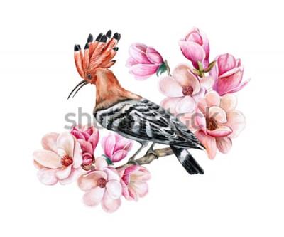 Sticker Vogel Hoopoe, der auf einer blühenden Frühlingsniederlassung sitzt. Magnolienblüten. Aquarell. Illustration. Vorlage. Clip Art. Nahansicht. Karte