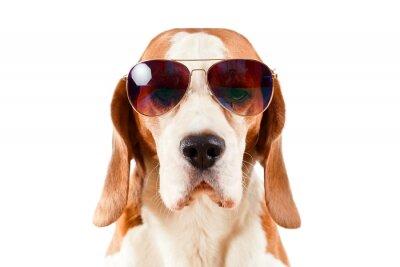 Sticker Wachhund in Sonnenbrille auf weißem